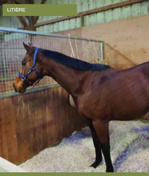 Chanvre pour litière cheval